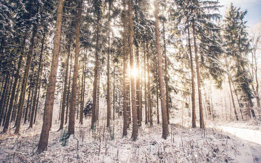 Ekologiset ja esteettiset puumastot vaihtoehto teräsmastoille