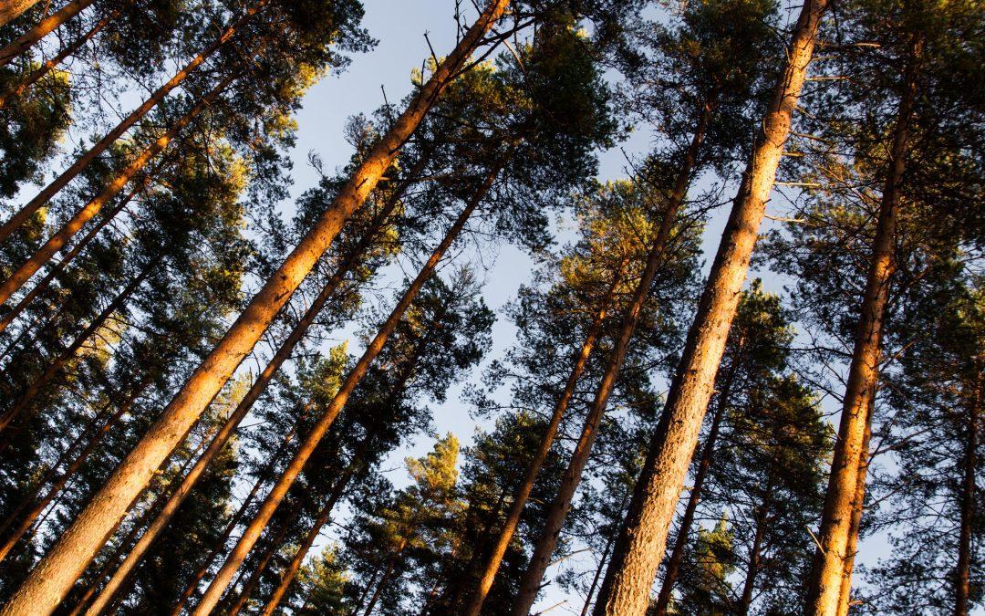 Nyt on vaihtoehto – työtä ekologisen vaihtoehdon puolesta